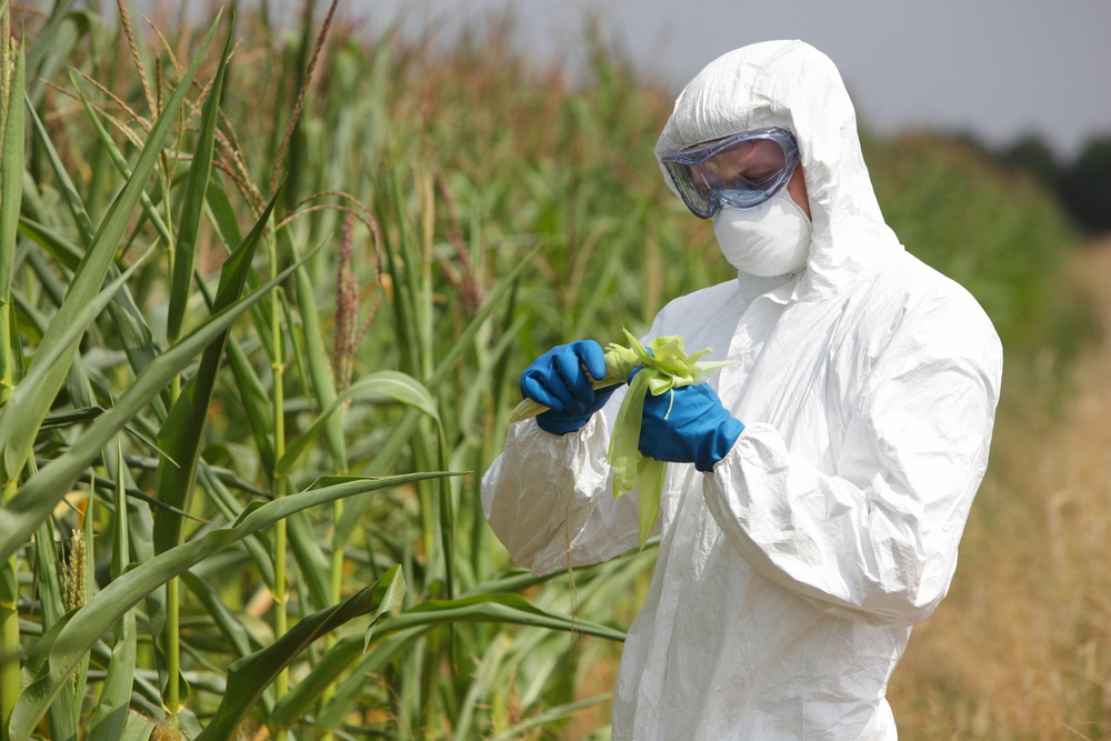 combining genetically modified crops with existing agricultural technologies